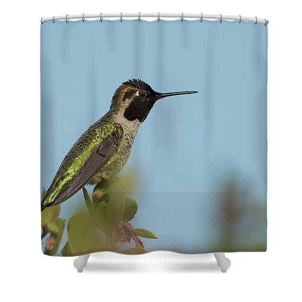 Hummingbird On Watch Shower Curtain