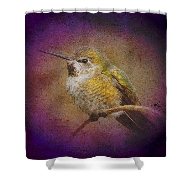 Hummingbird Rufous Shower Curtain