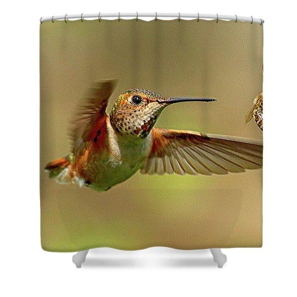 Hummingbird Vs. Bees Shower Curtain