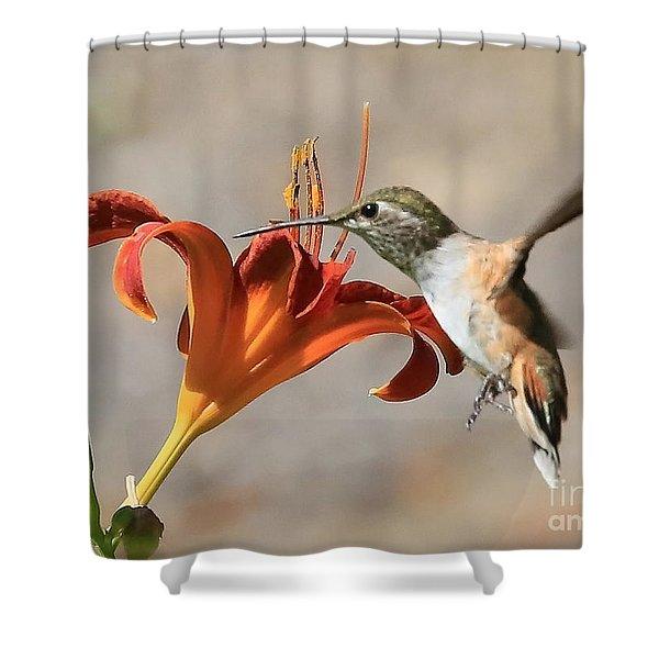 Hummingbird Whisper  Shower Curtain
