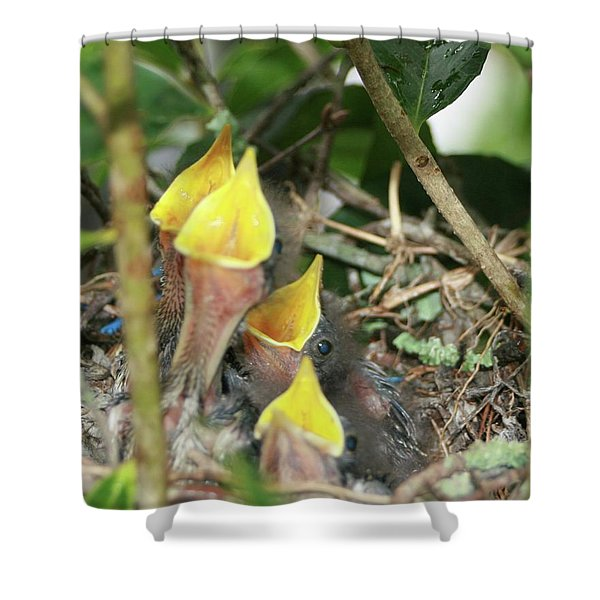 Hungry Baby Birds Shower Curtain