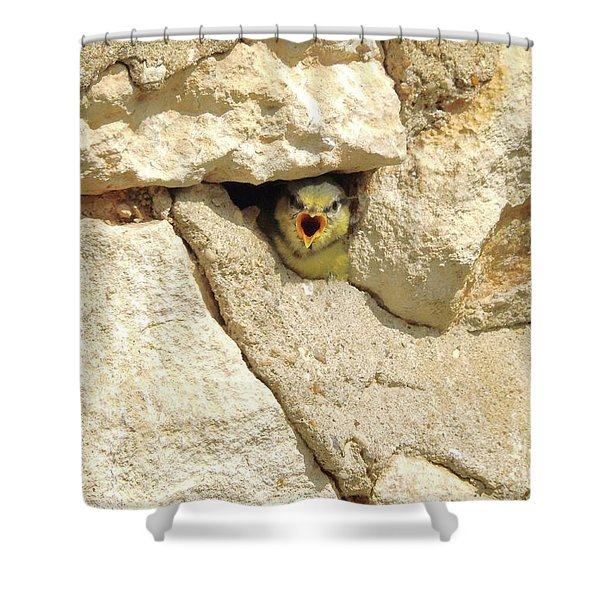Hungry Chick Shower Curtain