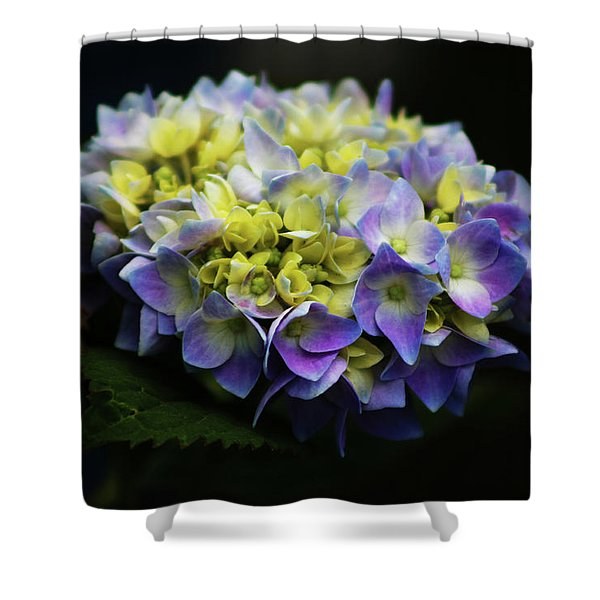 Hydrangea 3705 H_2 Shower Curtain