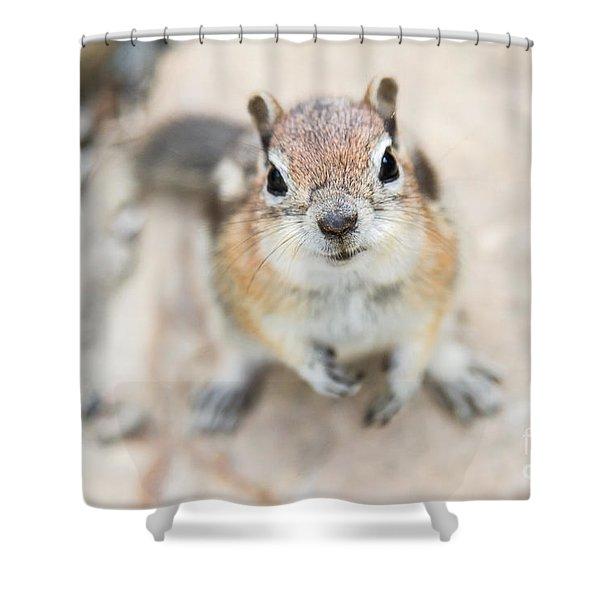 Hypno Squirrel Shower Curtain