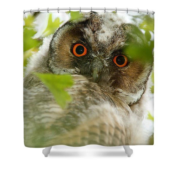 Hypnoteyes - Long-eared Owl Shower Curtain