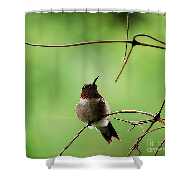 I Need A Drink Shower Curtain