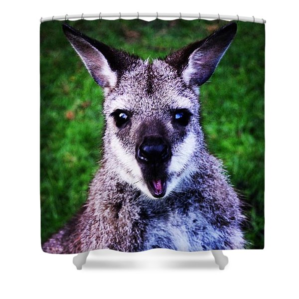 I Think I Took This Guy By Suprise 😯 Shower Curtain