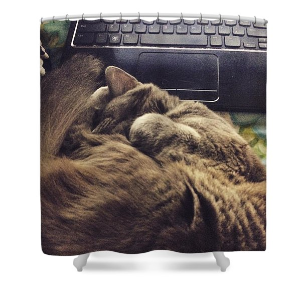 Study Cat Shower Curtain