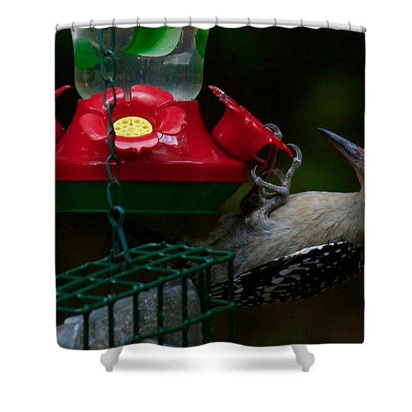 Shower Curtain featuring the photograph I Want To Be A Hummingbird by Robert L Jackson