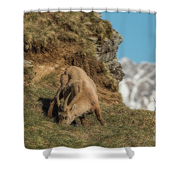 Ibex On The Mountains Shower Curtain