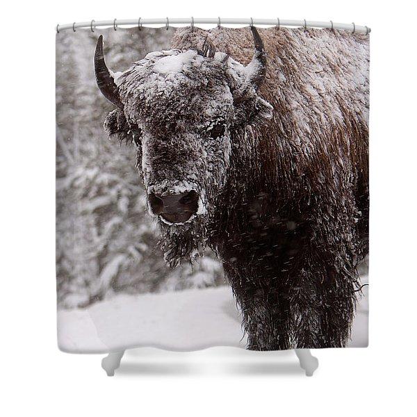 Ice Cold Winter Buffalo Shower Curtain