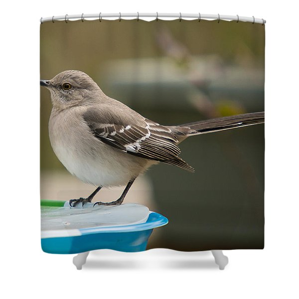 Shower Curtain featuring the photograph Ice Water by Robert L Jackson