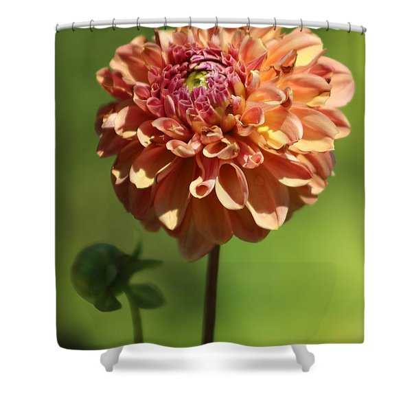 Iced Tea Dahlia In Marzipan And Milano Tones Shower Curtain