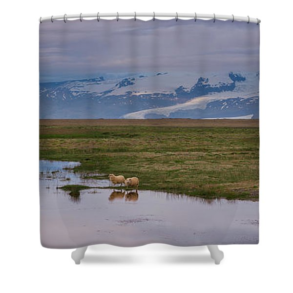 Iceland Sheep Reflections Panorama  Shower Curtain