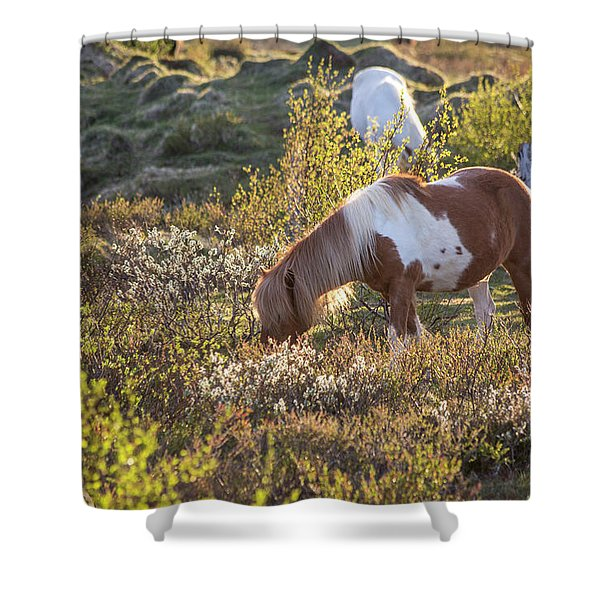 Iceland Tranquil Equine Sunlight Shower Curtain