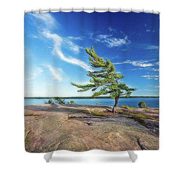 Iconic Windswept Pine Shower Curtain