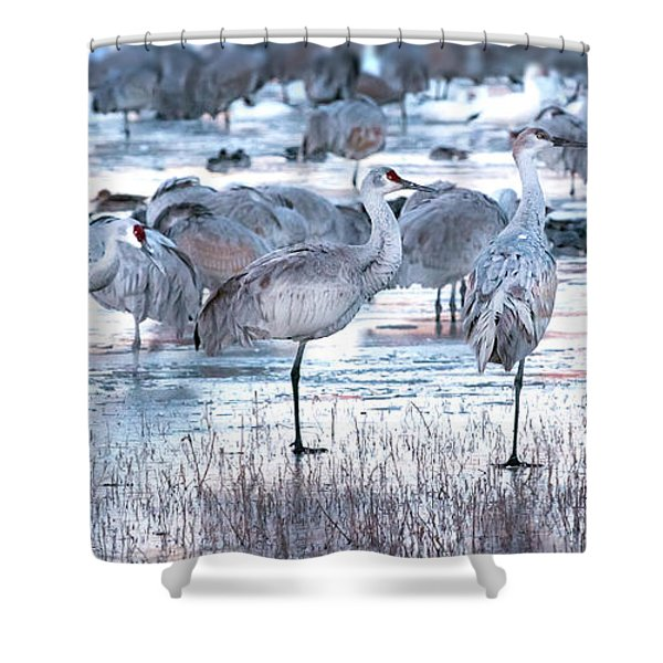 Icy Stroll Shower Curtain