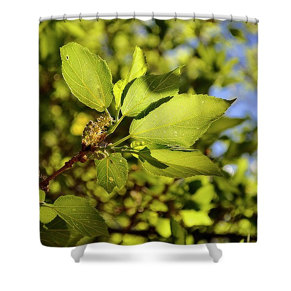 Illuminated Leaves Shower Curtain