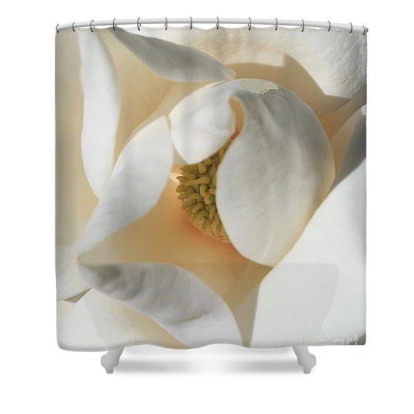 Illuminated Magnolia Macro Shower Curtain
