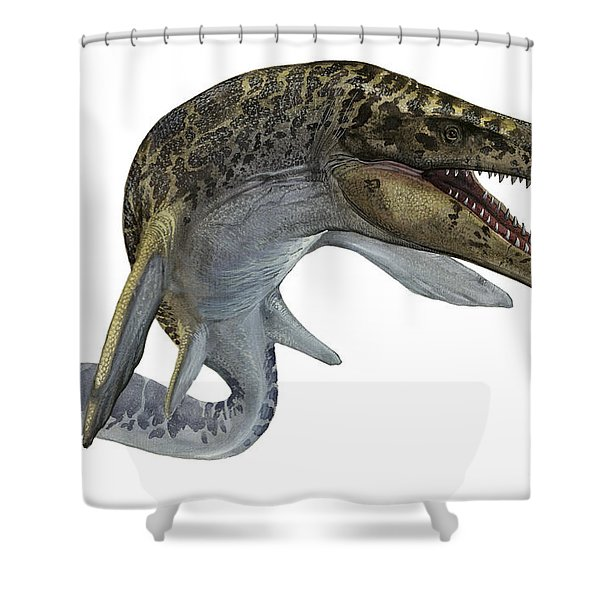 Illustration Of A Mosasaurus Shower Curtain