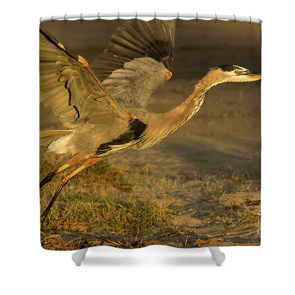 I'm Out Of Here Wildlife Art By Kaylyn Franks Shower Curtain