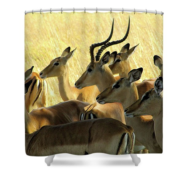 Impalas In The Plains Shower Curtain