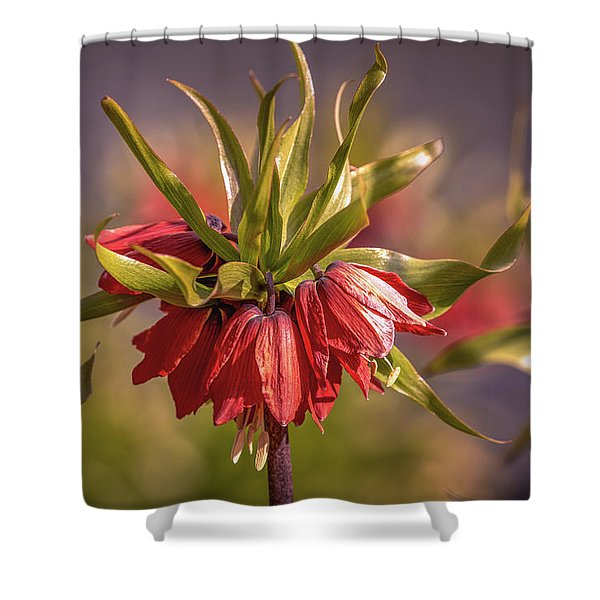 Imperial Crown #g3 Shower Curtain