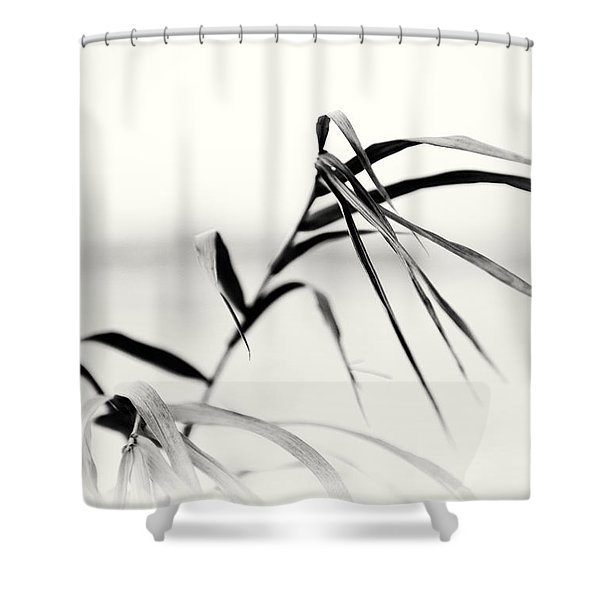 Impressions Monochromatic Shower Curtain