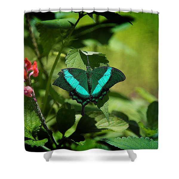 In A Butterfly World Shower Curtain