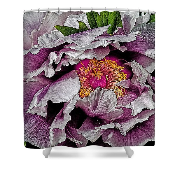In The Eye Of The Peony Shower Curtain