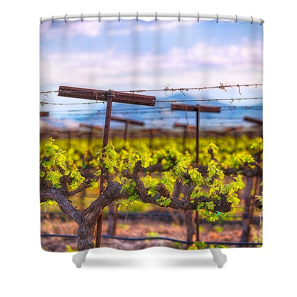 In The Vineyard Shower Curtain