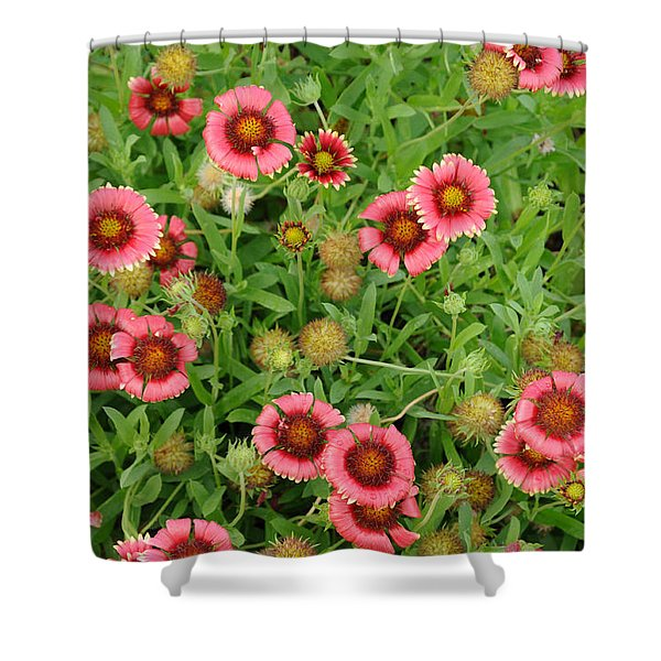 Indian Blanket Flowers Shower Curtain
