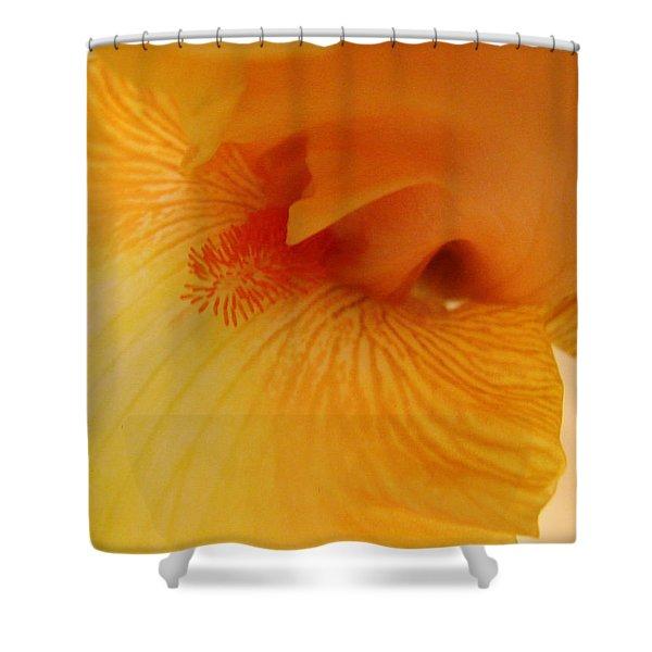 Inner Iris, Yellow, Close-up Shower Curtain
