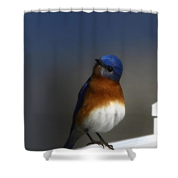 Inquisitive Bluebird Shower Curtain