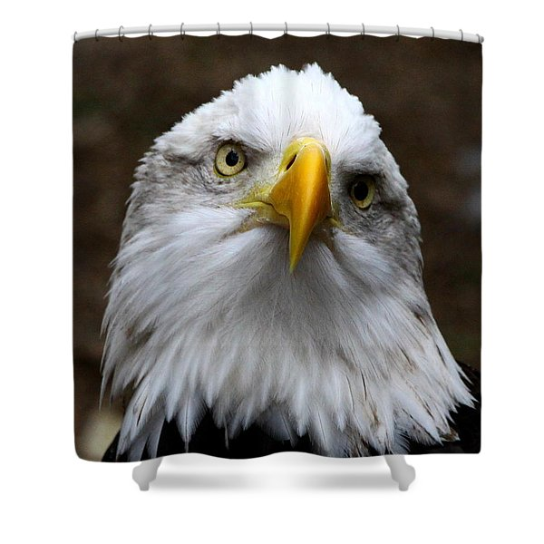 Inquisitive Eagle Shower Curtain