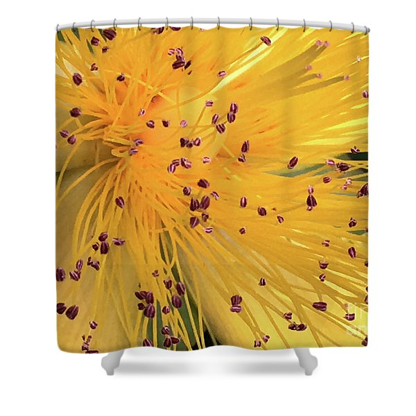 Inside A Flower - Favorite Of The Bees Shower Curtain