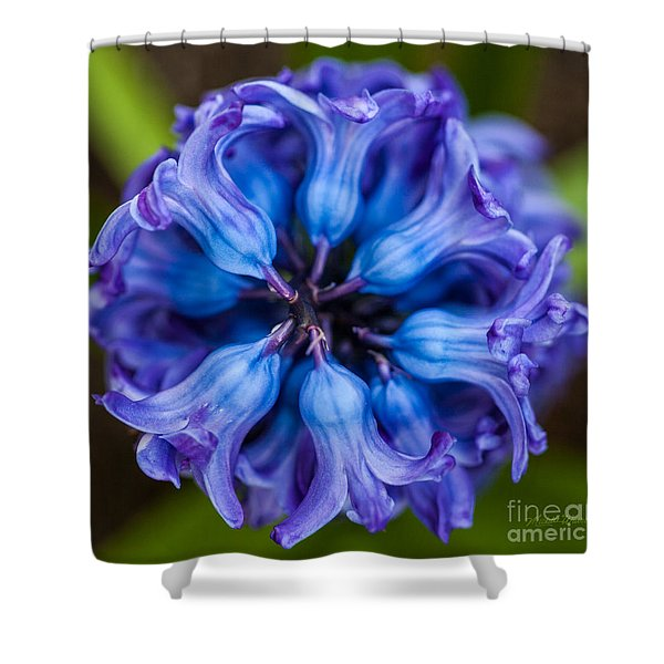 Inside A Hyacinth Bloom Shower Curtain