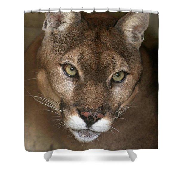 Intense Cougar Shower Curtain