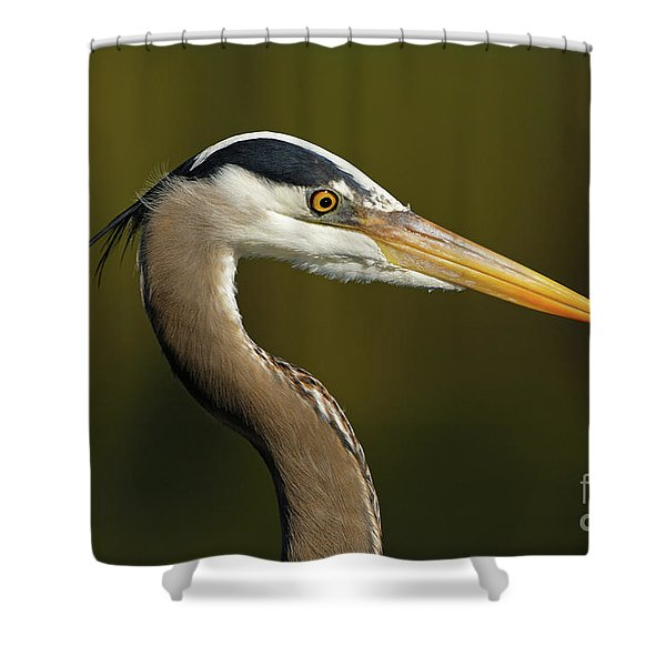 Intensity Of A Heron Shower Curtain