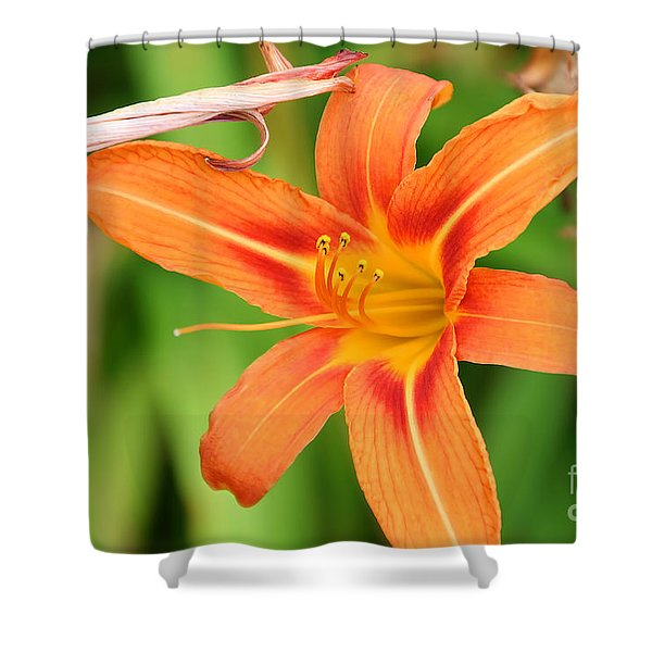 Intimacy Shower Curtain