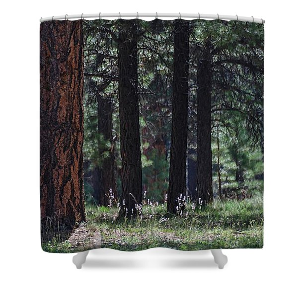 Into The Light There Be Shadows Shower Curtain