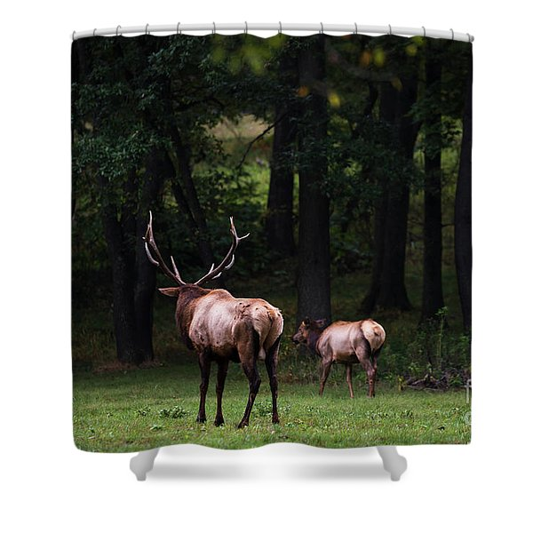 Shower Curtain featuring the photograph Into The Wilderness by Andrea Silies