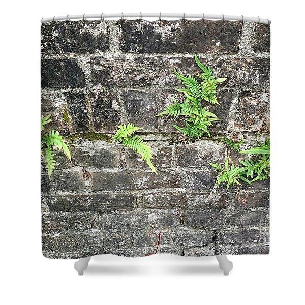 Intrepid Ferns Shower Curtain