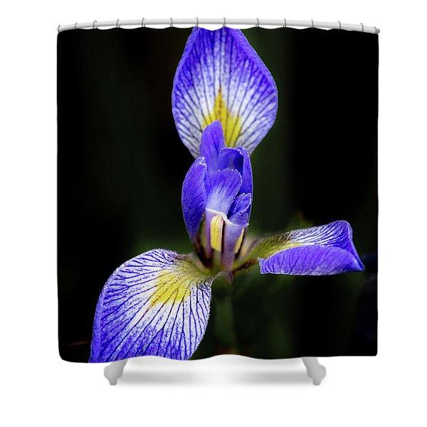 Iris #1 Shower Curtain