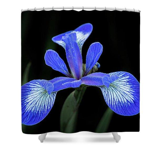 Iris #2 Shower Curtain