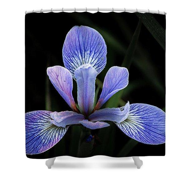 Iris #4 Shower Curtain