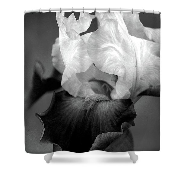 Iris 6621 H_5 Shower Curtain
