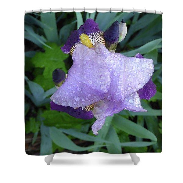 Iris After The Rain IIi Shower Curtain