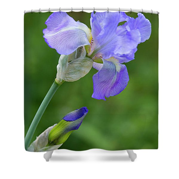 Iris Blue Shower Curtain