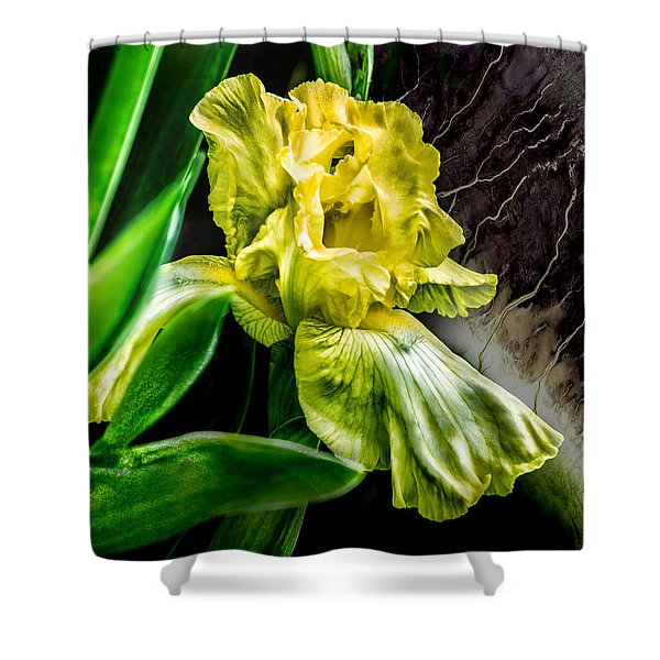 Iris In Bloom Two Shower Curtain
